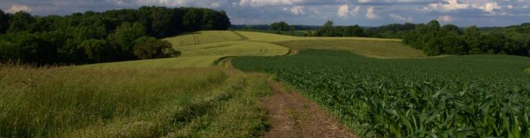 Field with Path